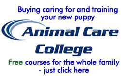 Animal Care College