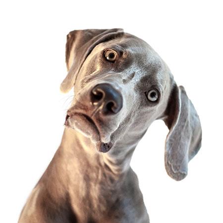 My Dog Doesn T Bark