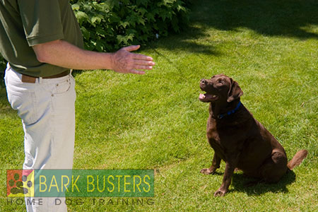 Bark Busters Home Dog Training