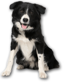 Bark Busters Home Dog Training Philosophy