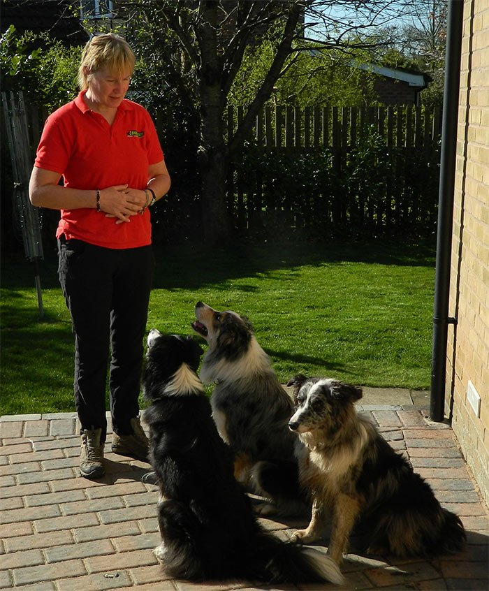 Manda Denny, Dog Obedience Trainer & Behavioural Therapist for Bradford, Halifax & Skipton, Leeds, Wakefield & Huddersfield