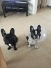 Photo of A.L.'s dog