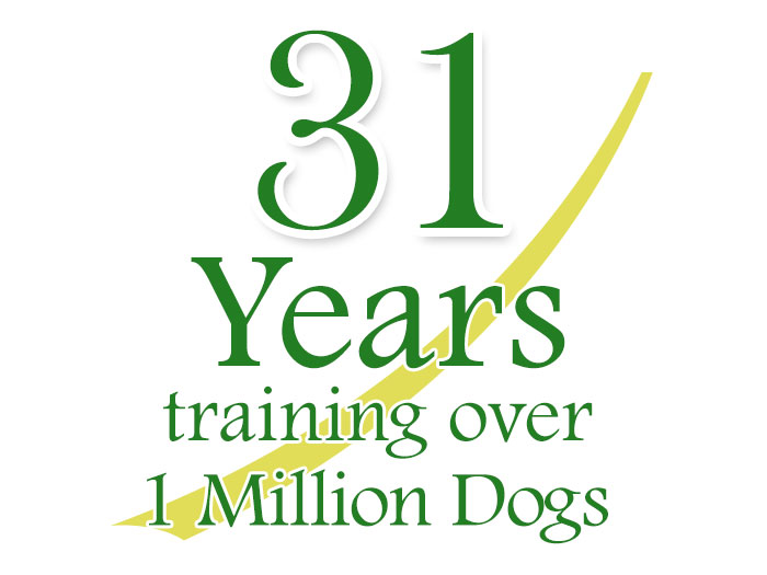 31 years helping millions of dogs