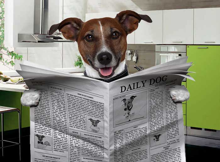 Daily Dog News