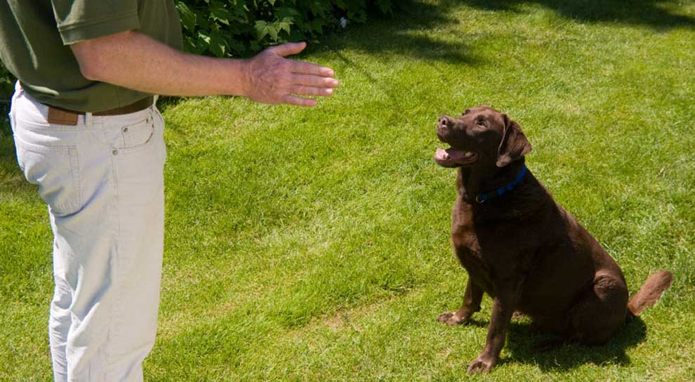 Home Dog Training Services